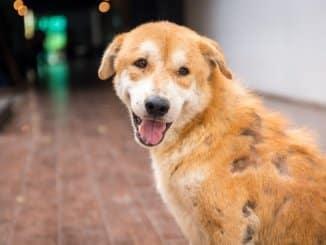 Bild von Hund mit Räude