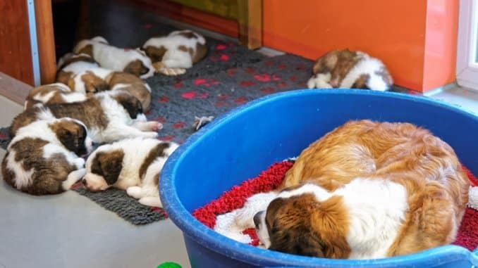 Kunststoff-Hundekorb