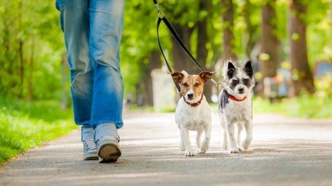 Zwei Hunde an einer Doppelleine