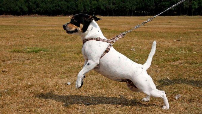 Das Führgeschirr für den Hund