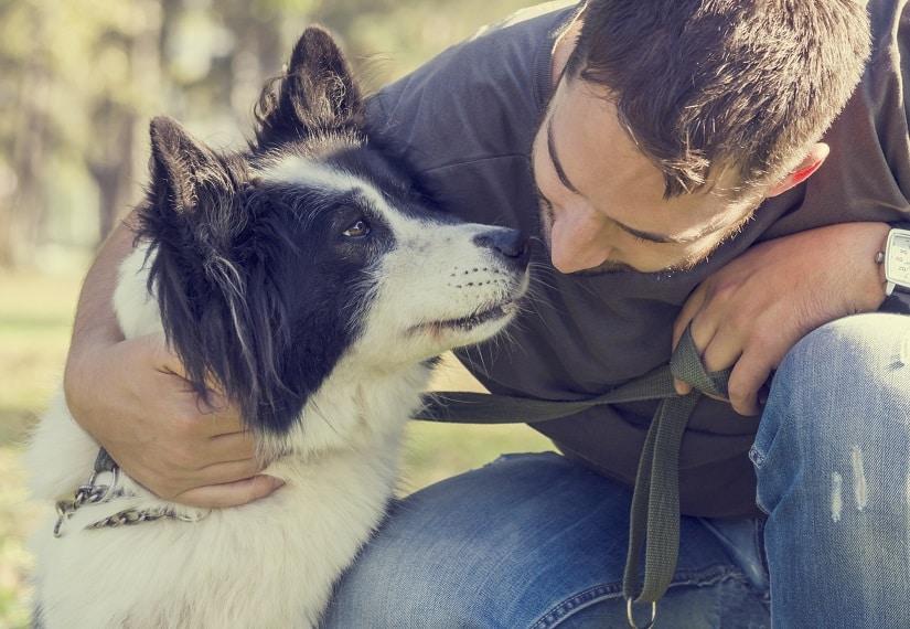 Hund mit Arthrose