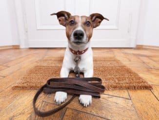 Die Hundeleine darf in einem Haushalt mit Hund nicht fehlen