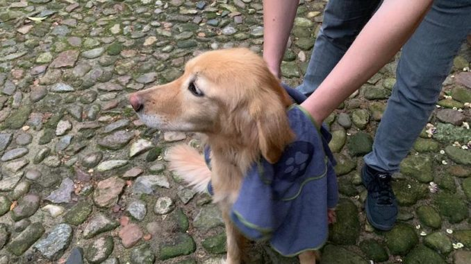 Fluffino Hundehandtuch