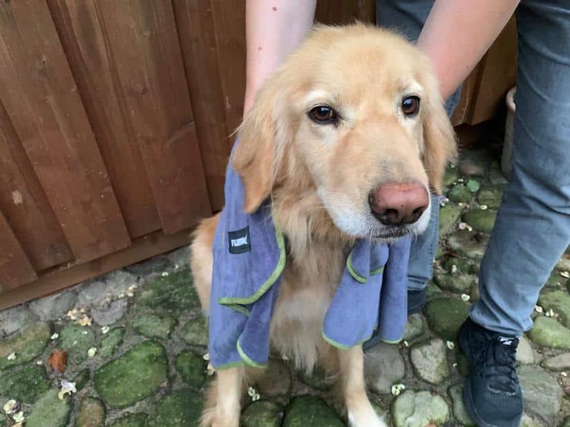Holly wird mit dem Fluffino Hundehandtuch abgetrocknet