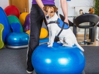Hund in einer Klinik für Hundephysiotherapie