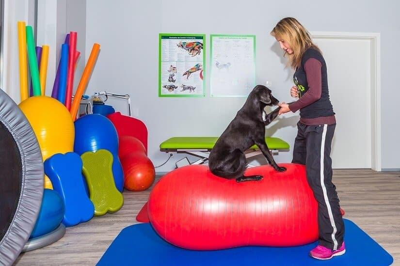 Kosten einer Hundephysiotherapie