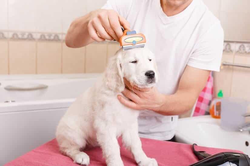 Regelmäßiges Bürsten als Vorbeugungsmaßnahme zur trockenen Haut bei Hunden