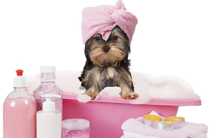 Hund in kleiner Badewanne
