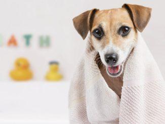 Hund nach einem Bad in seiner Badewanne
