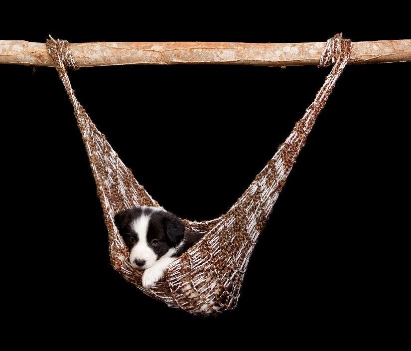 Welpe auf einer Hundehängematte