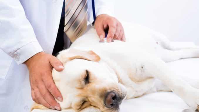 Schmerzmittel für Hunde