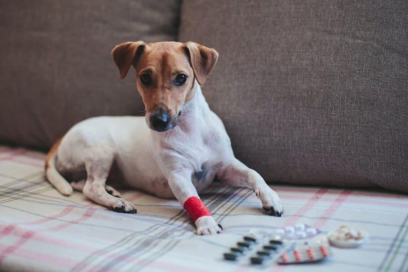 Schmerzmittel für Hunde kaufen