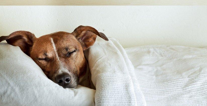 Hund schläft gemütlich in einem Hundebett