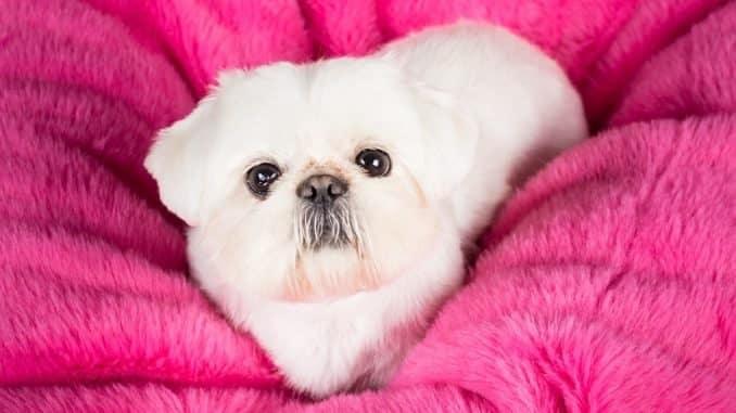 Kuschelsack für den Hund