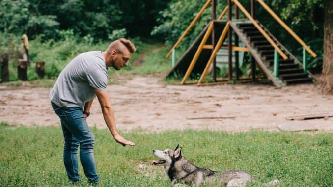 Training mit dem Hund vor der Begleithundeprüfung