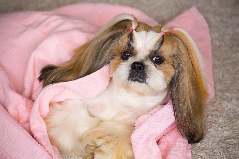 Hunde mögen es kuschelig!