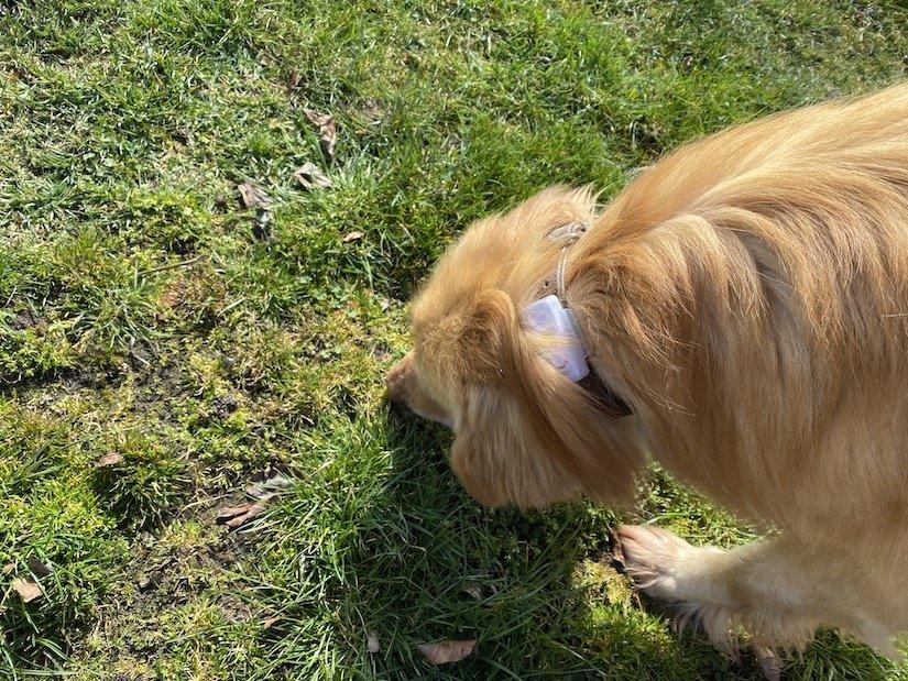 Weenect Dogs 2 im Praxistest 6
