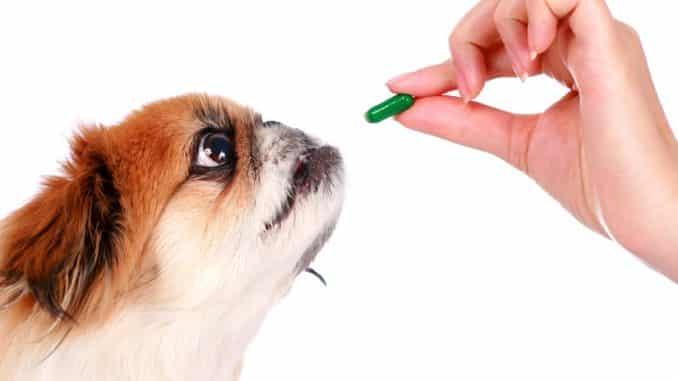 Wurmtabletten für den Hund