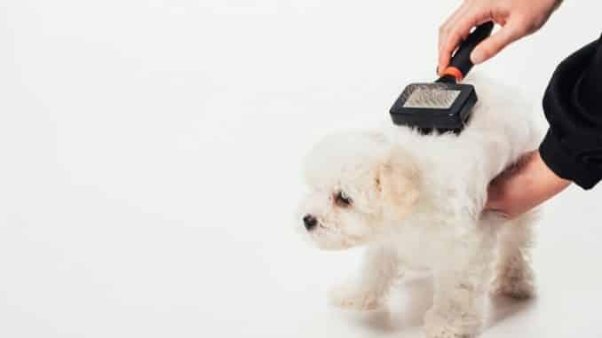 Die Zupfbürste für den Hund