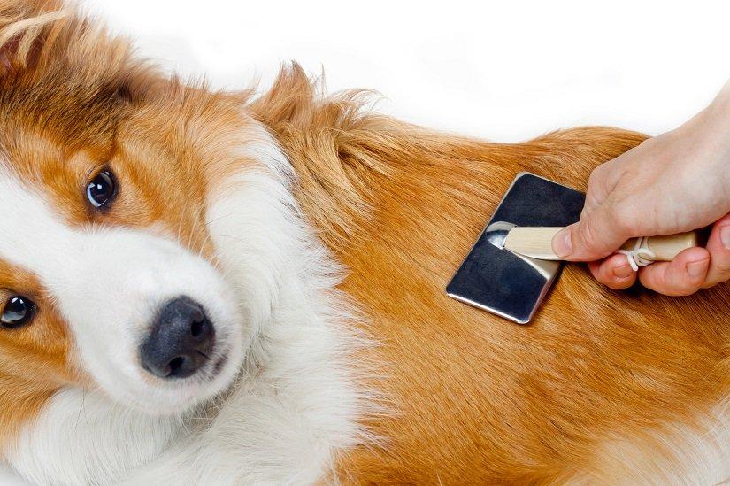 Hund mit langen Haaren genießt die Pflege mit einer Zupfbürste