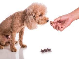 Entwurmungstabletten für den Hund