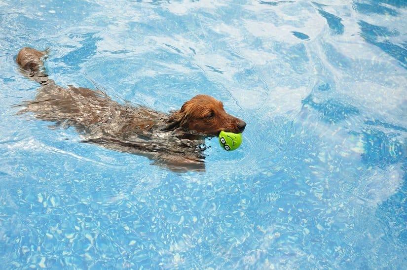 Ein Langhaar-Dackel in einem XXL Hundepoo