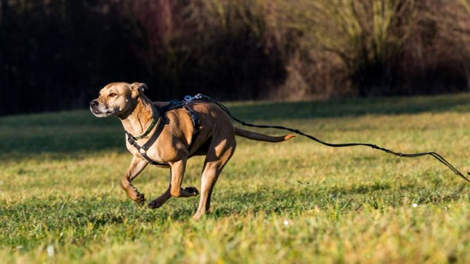 Panikgeschirr Hund