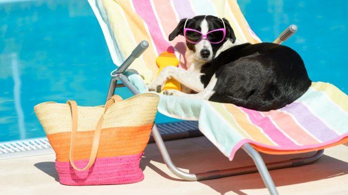 Sonnencreme für den Hund
