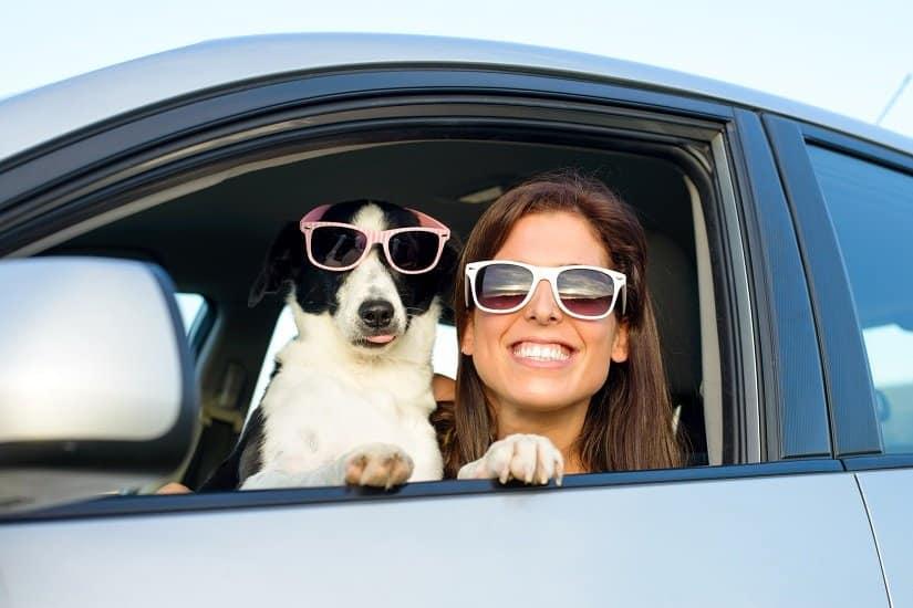 Mit einem Hundetrolley ist man gut gerüstet für unterwegs