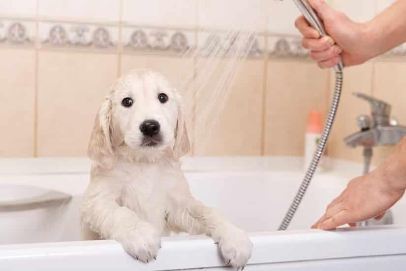 Flohshampoo für den Hund gibt es auch auf natürlicher Basis