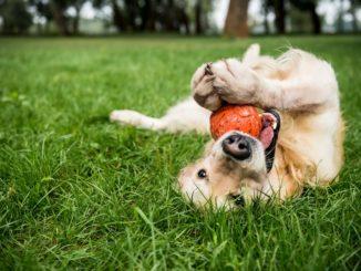 Futterball Hund