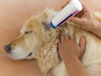Ohrreiniger für den Hund
