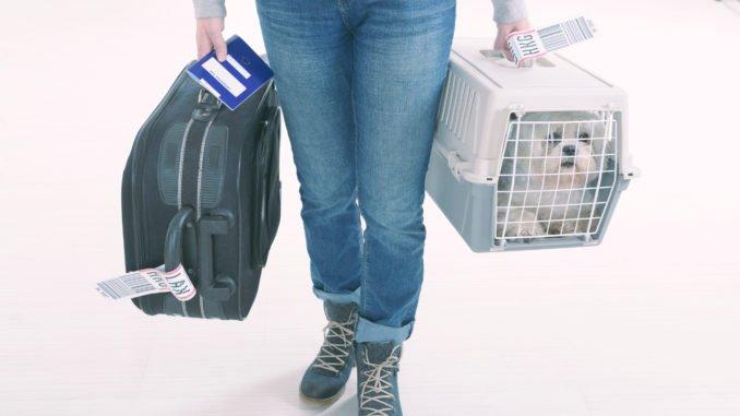 Flugbox für den Hund