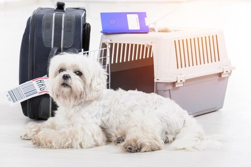 Hund liegt vor seinem Flugbox