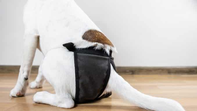 Hundehöschen