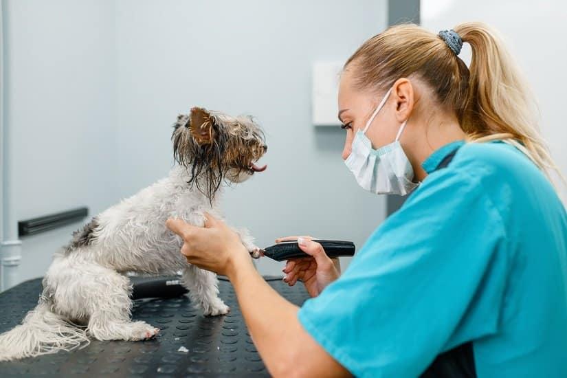 Hundekrallen werden in einem Hundesaloon geschliffen.