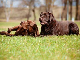 Die Outdoor-Hundeliege