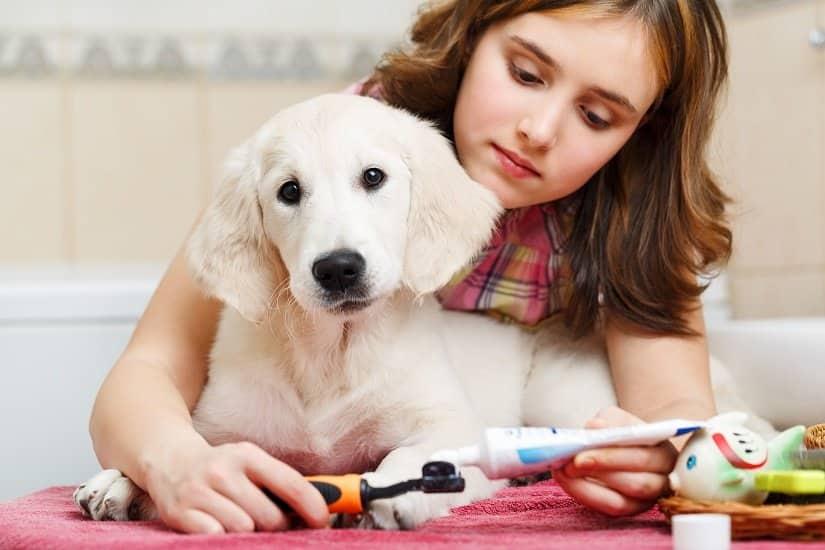 Ein Mädchen putz die Zähne ihres Hundes mit Hundezahnpasta