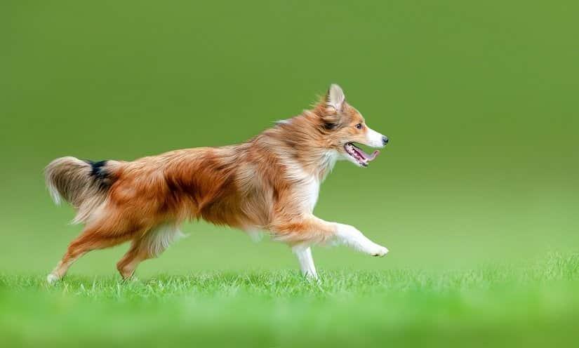 Fit dank der orthopädischen Hundematratze
