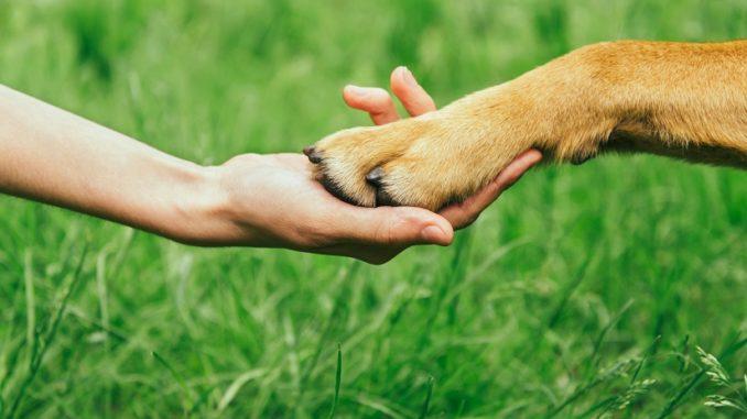 Krallenschleifer für den Hund