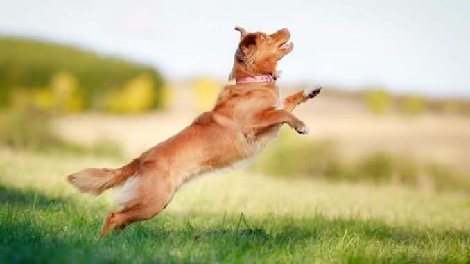 Reizangel Hund
