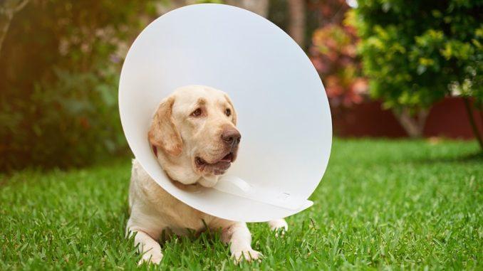 Schutzkragen für den Hund