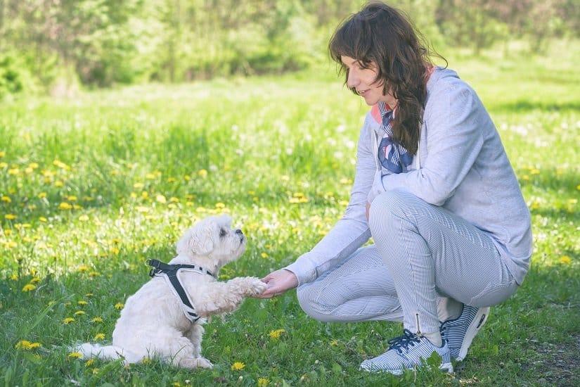 Frau trainiert Hund ohne Ferntrainer