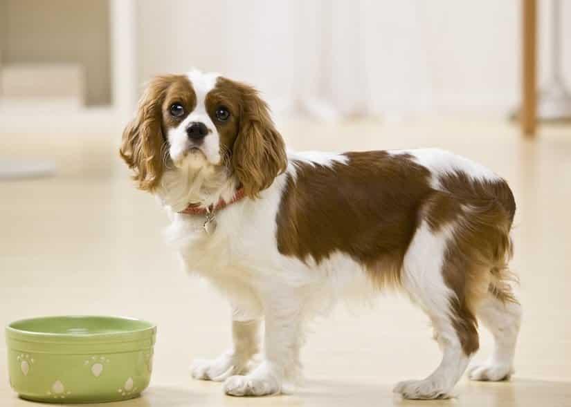 Ein Schlingen des heutigen Futters ist immer ein Gefahrenpunkt für jeden Hund
