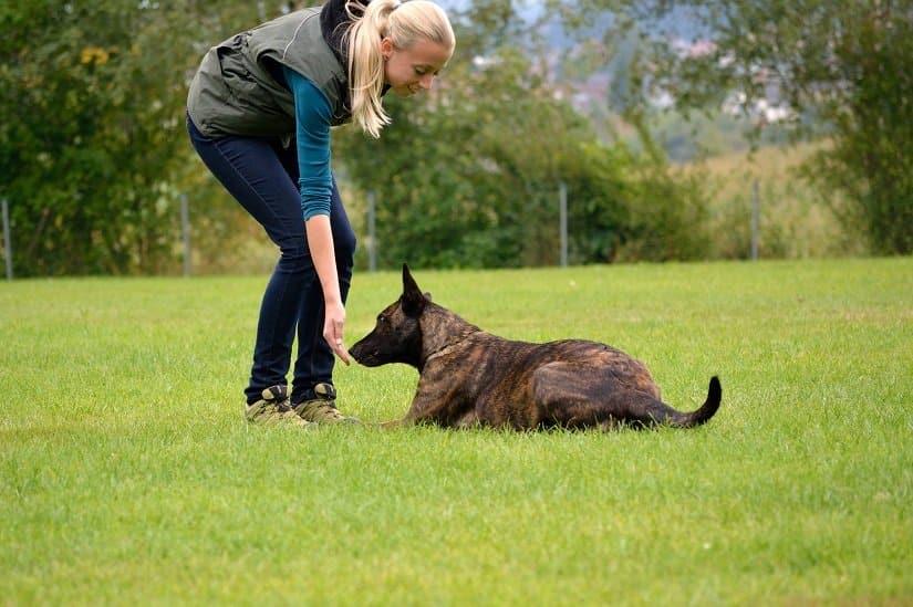 junge Frau belohnt ihren Hund