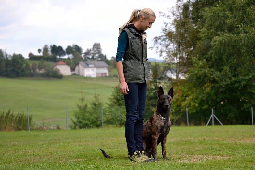 Der Holländische Schäferhund: beliebt als Hof- und Wachhund