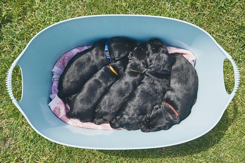 Mehrere Welpen in einem Hundekorb aus Plastik