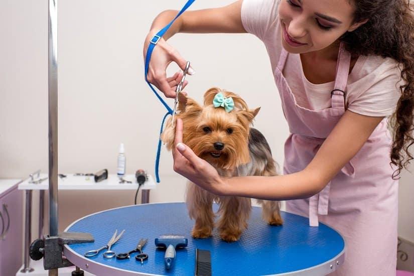 Einen Luxus, den sich viele Hundebesitzer gönnen, ist der Hundefriseur.