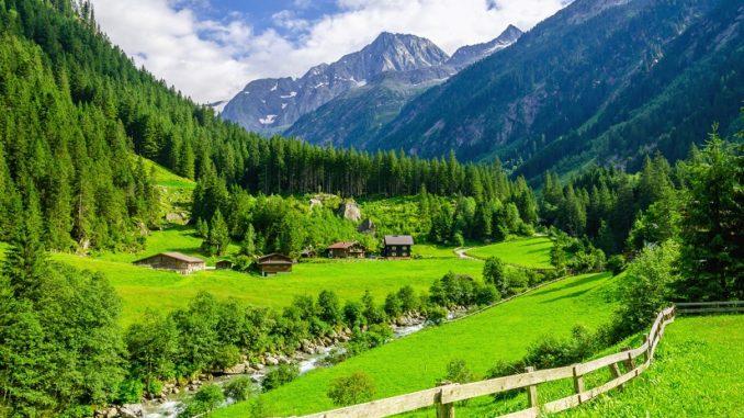 Die Tiroler Bracke