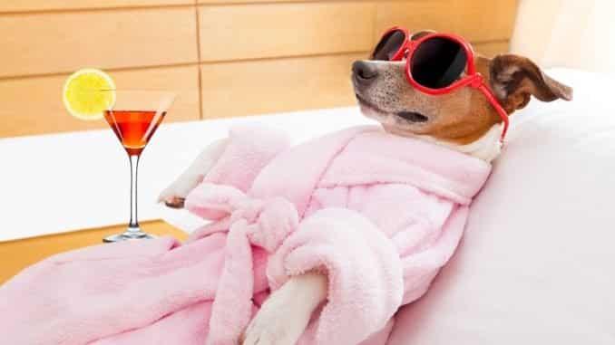 Wie viele Luxusgüter benötigt ein Hund?